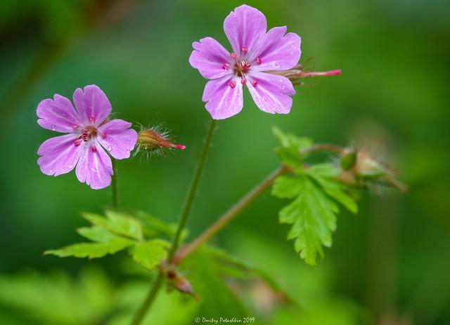 Beautiful purple wild forest flowers