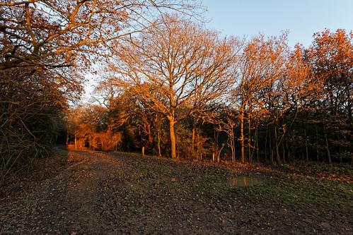 tree sunset mud track path wood woodland forest eppingforest plant winter chingfordplain