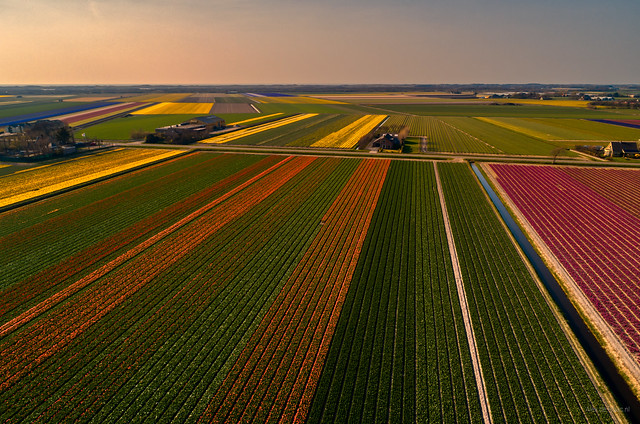Dutch Organised Agriculture.