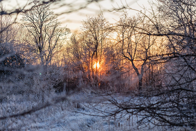 Embers of a Winter Day