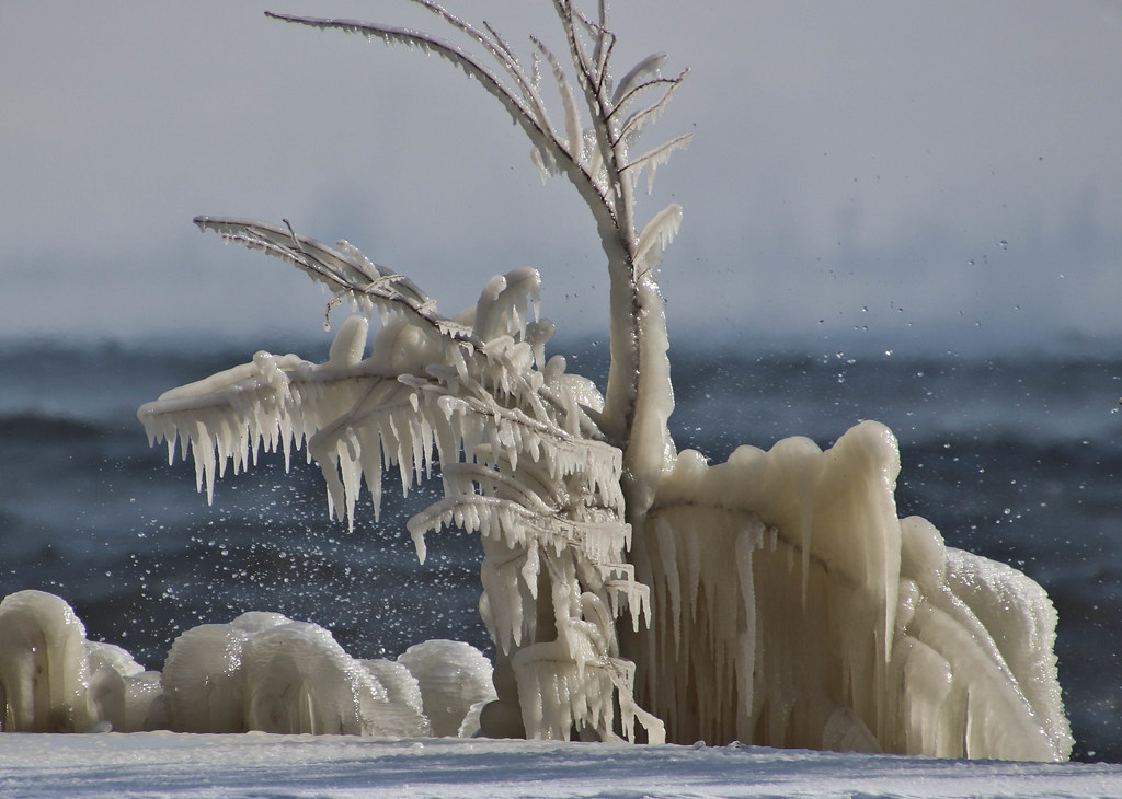 13  Nov 2019 Icy Shore Bigs-55