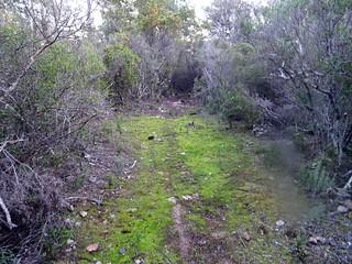 Dans la descente du PR2 (ancien chemin de Luviu) : traversée d'une plate-forme herbeuse