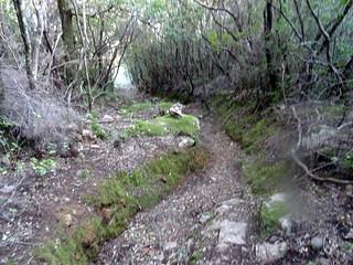 Dans la descente du PR2 (ancien chemin de Luviu)