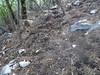 Les dégâts des sangliers en bordure du chemin