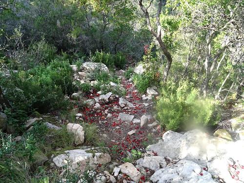 Les arbouses sur le sentier des carbunari