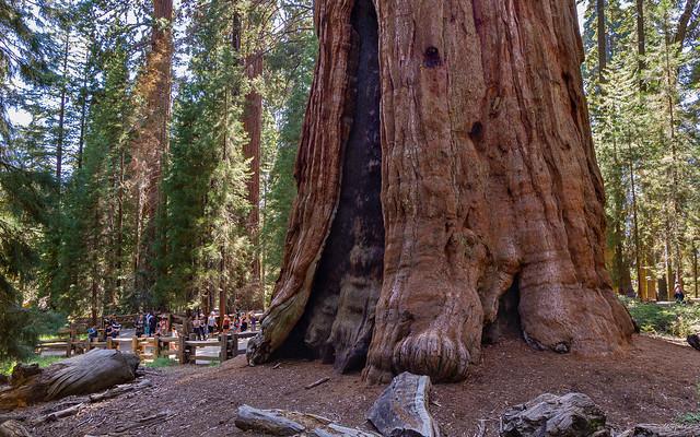 The General Sherman Tree