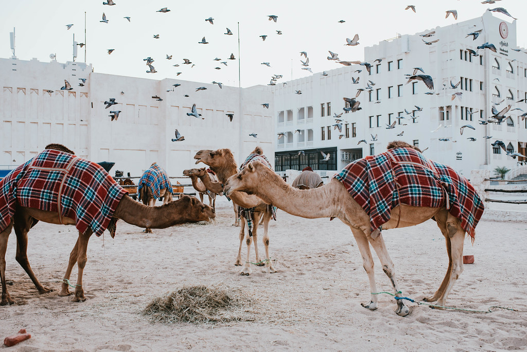 souq waqif kamelit