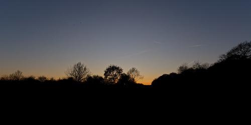 tree sunset sky plant skyline silhouette eppingforest woodland wood forest chingfordplain winter