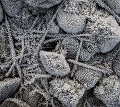 Kilmartin - Frost