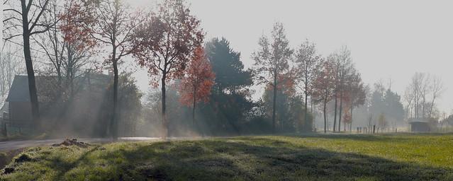 Morning dew - Bazel - Belgium