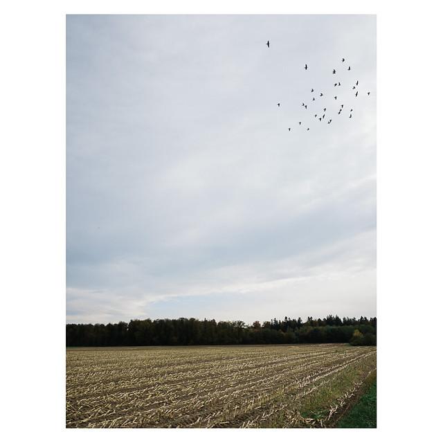 Ein paar Krähen überm Feld, Schafisheim