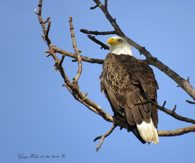 Florida Has The Largest Bald Eagle Population In The Lower 48 States.