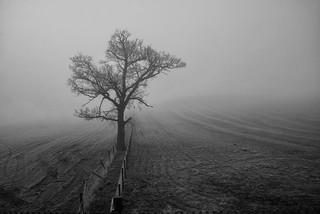 Scotland - Fog