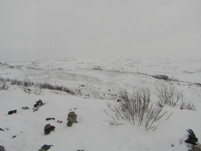 tundra (1)
