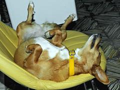 Duerme Chiquita duerme