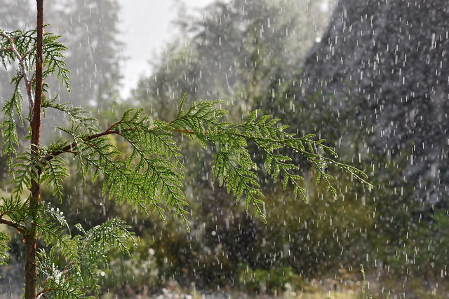 RAIN, AMAZINGLY FORCEFUL!   NEAR TELEGRAPH COVE,  BC