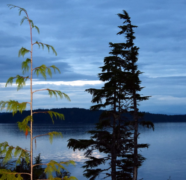 TREES AND SCENERY IN JOHNSTONE STRAIT.  NEAR TELEGRAPH COVE,  BC.