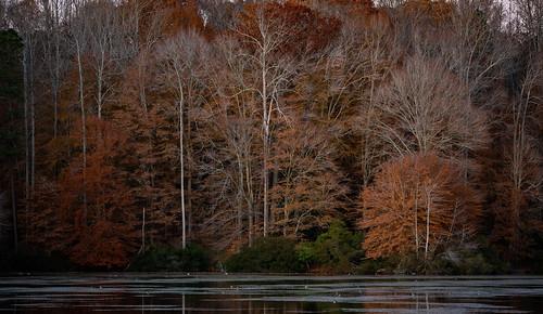 gloucester virginia va 2019 november zachclarke2 zachclarke rural nikon d5600 nikond5600 beaverdampark park sunset dusk