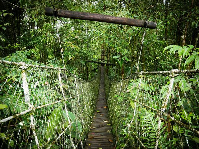 The door to the forest - Parque das neblinas - Bertioga - Brasil