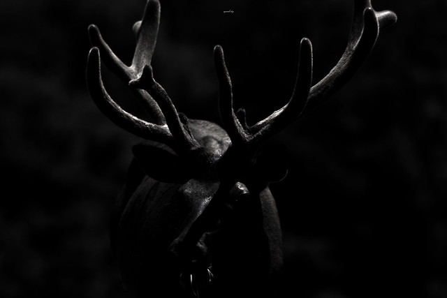 Bull Abstract