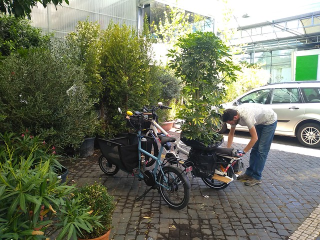 Trees by bike