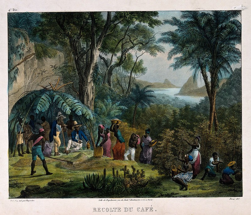 Indian workers harvesting the crop on a coffee plantation. Coloured lithograph by Deroi, c. 1850, after J. M. Rugendas.