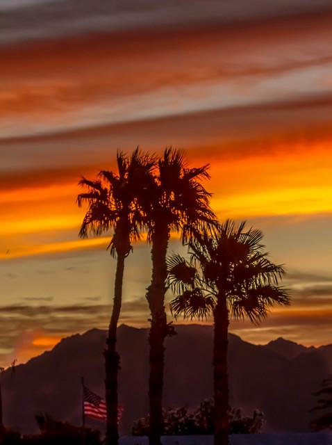 Palm Trees And Layered Sunrise