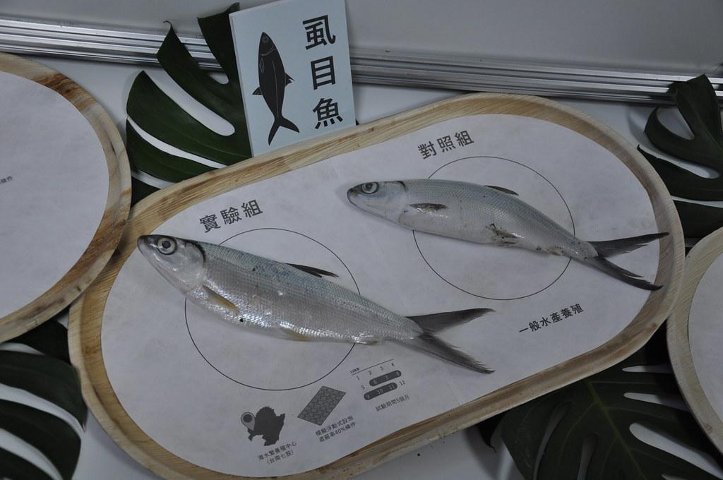 水試所展現過去一年漁電共生試驗成果。孫文臨攝