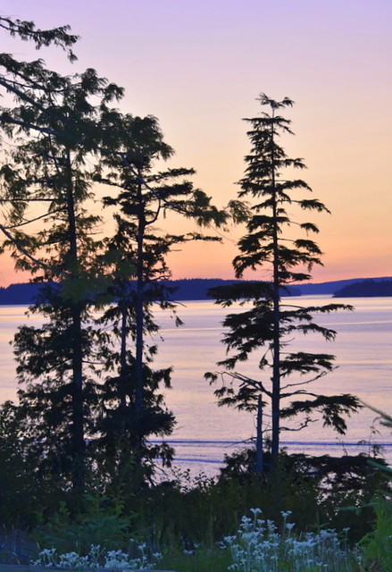 TREE SILHOUETTES AND THE SUNSET.  LOOKING OUT FROM TELEGRAPH COVE TO JOHNSTONE STRAIT,  BC.