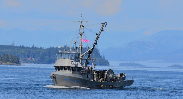 FISHBOAT COMING HOME WITH A SUCCESSFUL CATCH FROM THE PACIFIC OCEAN.  NORTHERN VANCOUVER ISLAND,  BC.