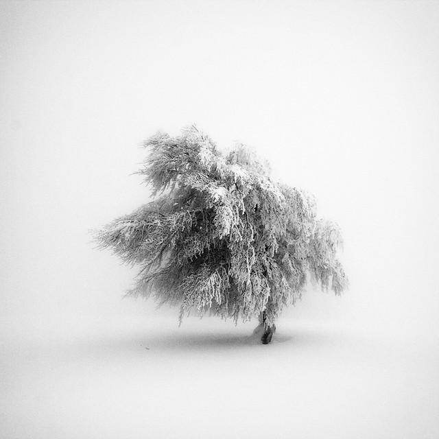 Frozen Life VIII