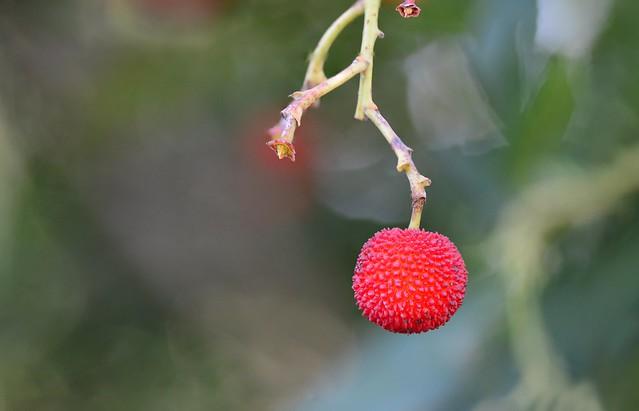 2019-12-04_06-31-17 fruit de tardor.Autumn fruit