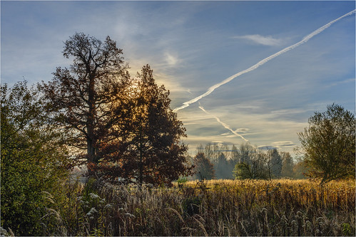 germany bavaria deuringerheide landscape forest trees sunrise sky clouds autumn sonyilce7m3
