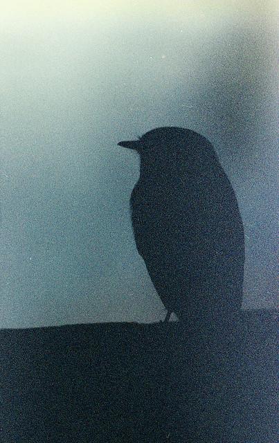 6am bird