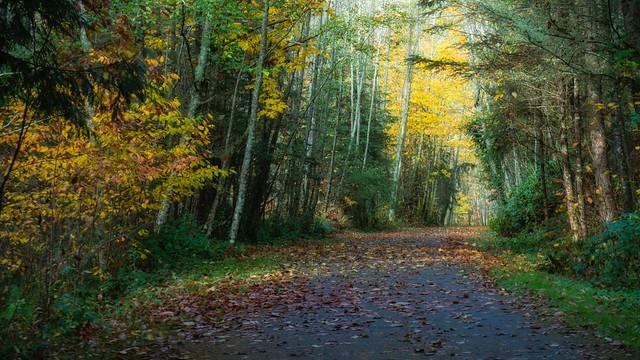 Fall on the Larry Scott trail
