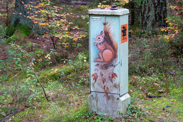 Squirrel on junction box