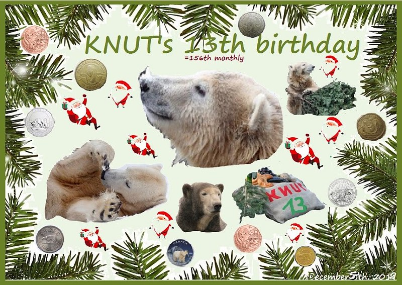 KNUT_156thMonthly_13YEARs_5Dezember2019_COLLAGE_Mi_03h00_191204