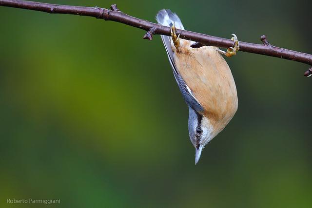 Hanging - appeso
