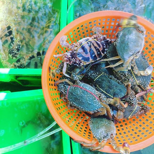 Phượt Vũng Tàu – Kinh nghiệm mua hải sản chợ Xóm Lưới (20)