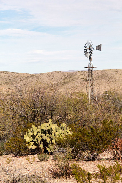 Prickly Windmill - HWW!