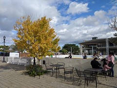 Ginkgo Tree and Ice Rink