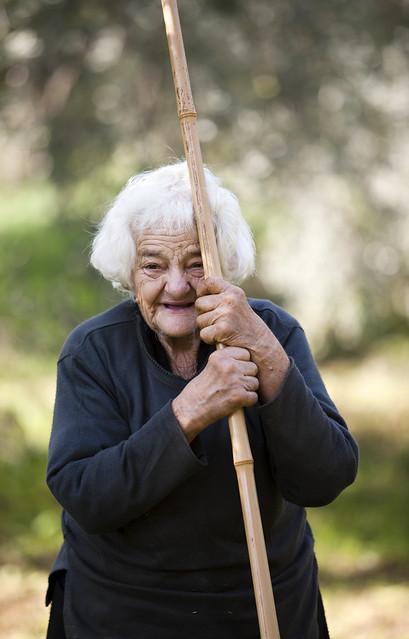 Alte Griechische Frau bei der Olivenernte