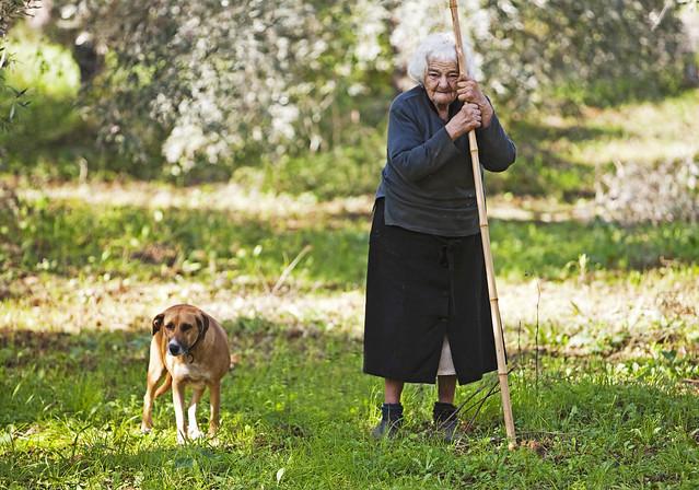 Alte Frau mit Hund bei der Olivenernte