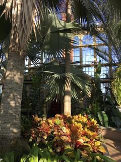 Rawlings Conservatory - 1888 Palm House