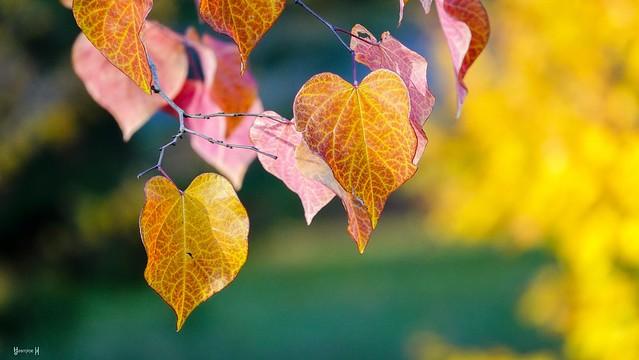 #Autumn - 7806