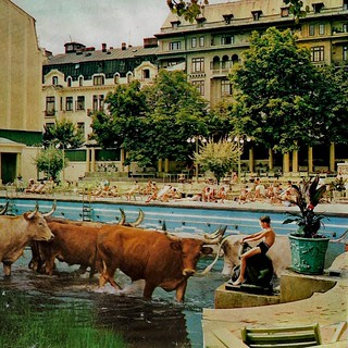 poolside hangout