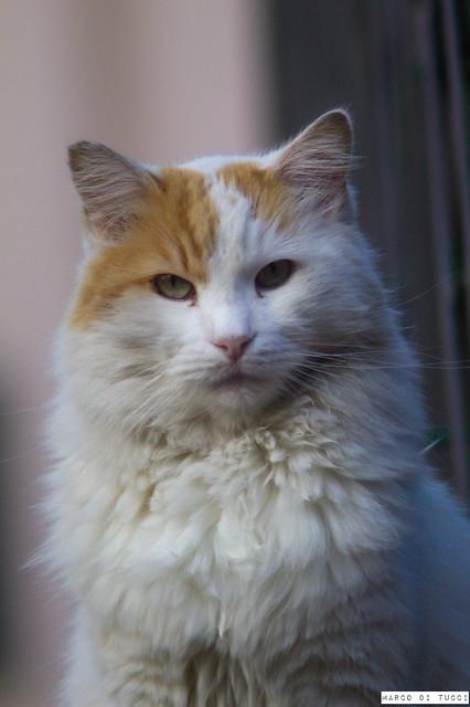 My cat Briciola
