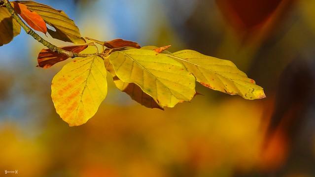 #Autumn - 7807