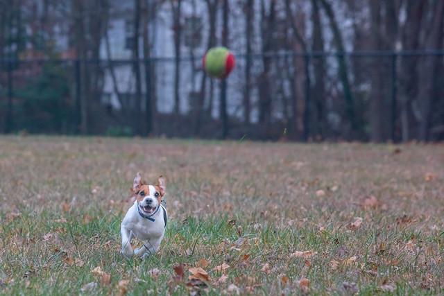 Ball Hunter