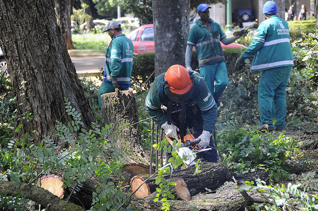 05/12/2019. Prefeitura executa trabalhos preventivos em árvores da capital. Fotos: Divulgação/PBH